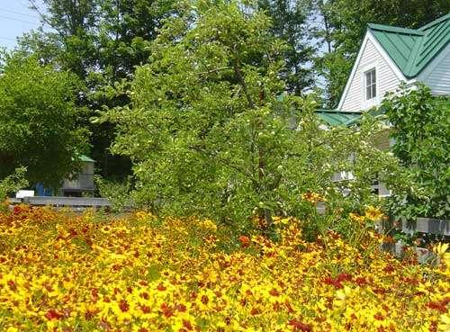 Encouraging the Honeybees: Making a Bee Garden