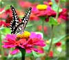 Intense color attracts butterflies