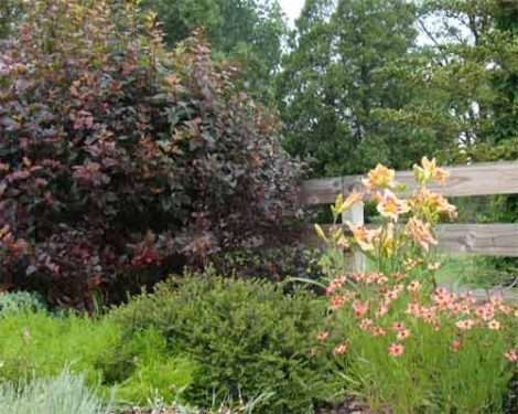 The Garden Driveway border of mixed plantings