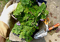 gardening how-to