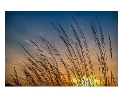 Prairie Grass Sunset