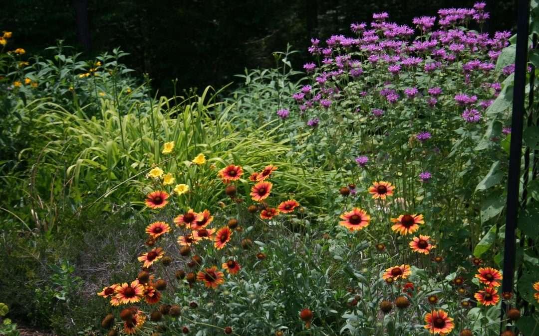 Perennial garden plants perennial flowers mightylinksfo