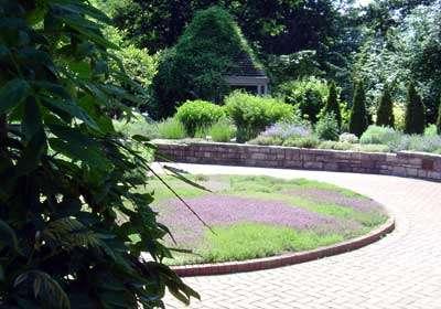 thyme varieties in a formal garden
