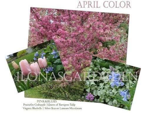 spring bloom companions
