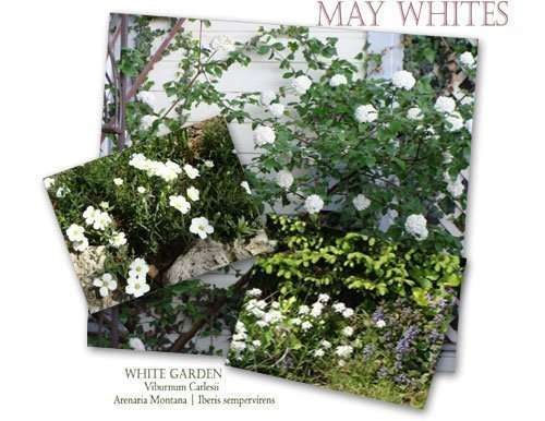 A Tranquil, White, Scented Garden
