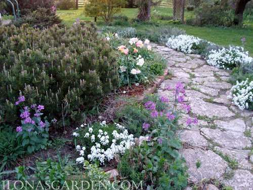 12 Low Growing Spring Perennials
