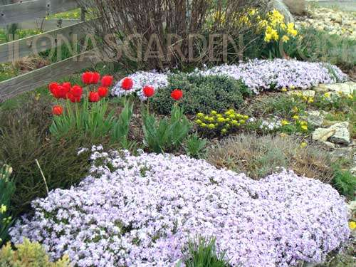 Spring Garden Bulbs