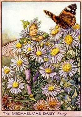 beloved flower fairies by Cicely Mary Barker