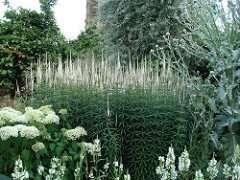 Vita Sackville-West garden of white flowers