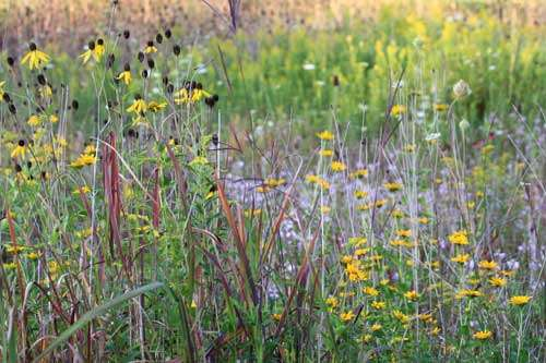 The subtle beauty of the prairie