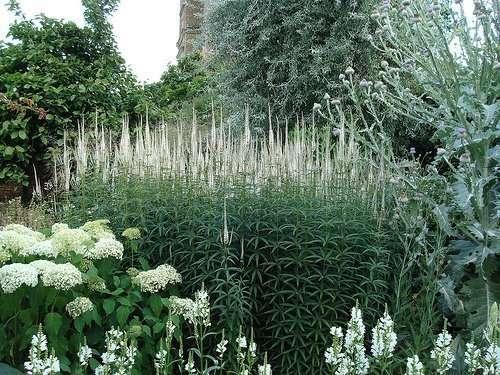 Sissinghurst garden
