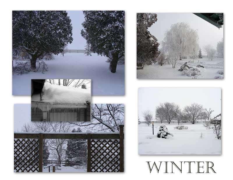 Winter Outlines Garden Bones