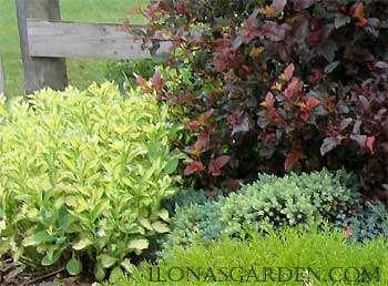 Ilona's Real Garden
