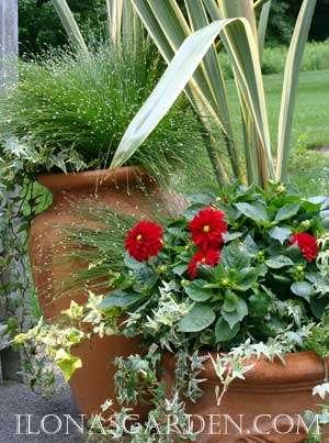 Container Garden Recipe #4