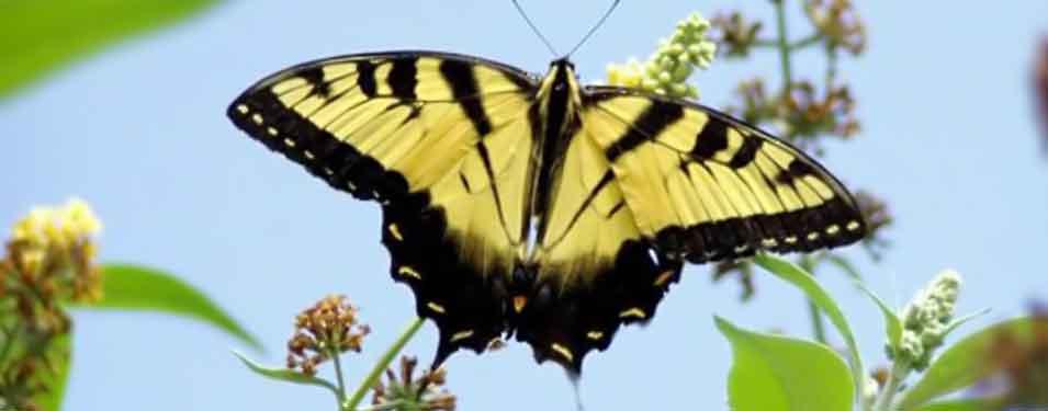 Butterfly Garden, Make Your Yard A Destination