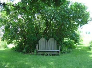 bench under the lilac