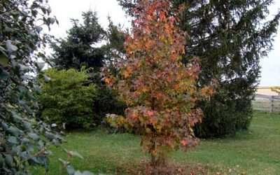 Planting a Tree or a Shrub