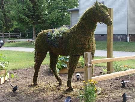 Horse topiary
