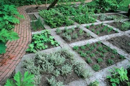 stylish vegetable plot