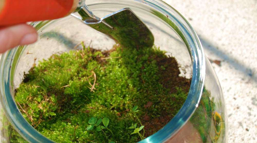 how to make a fairy garden terrarium - Fairy Garden Terrarium