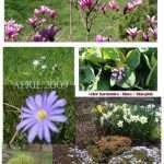 April blooms in blue tones