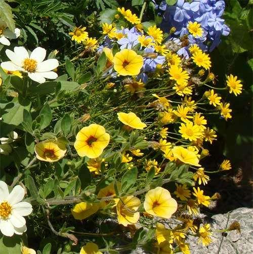 garden flower container