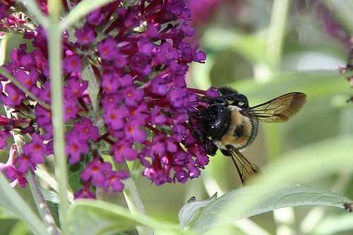 Bees love fragrant flowers