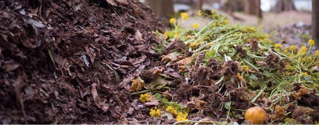 Composting, A New Pile Of Info