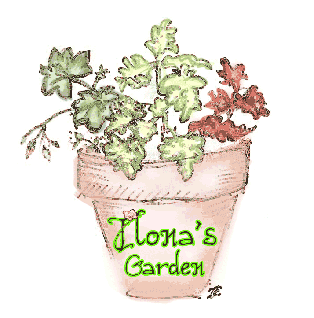This is Ilona's Garden