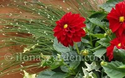 Summer Flower Container Ideas