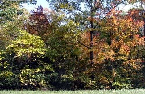 Leaves turn beautiful colors starting in early October