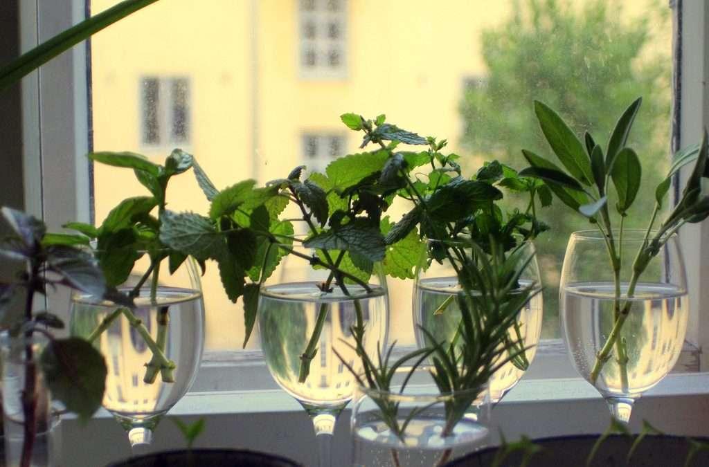 Herb Growing Guide