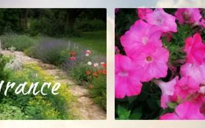 Plant A Garden For The Fragrance Of It