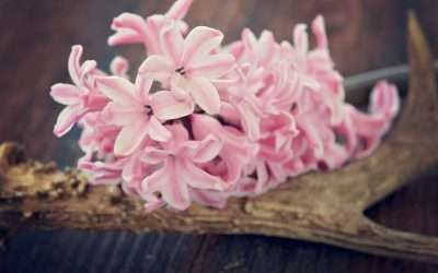 An All Pink, All Season Flower Garden Plan