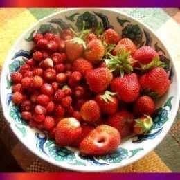alpine berries