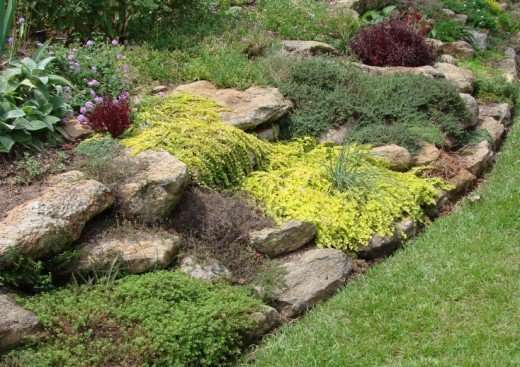 An Easy Planting With Sedums Makes A Low Maintenance Front Yard Feature