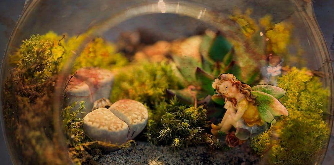 New: Fairy Garden Terrarium Ideas