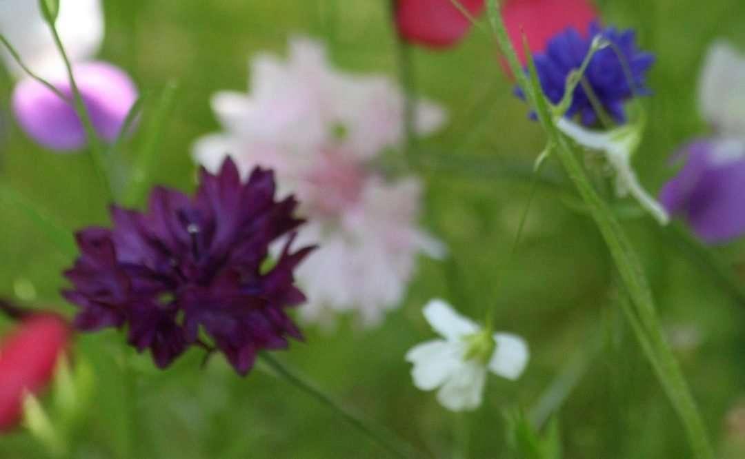 Simplifying Garden Color Theory