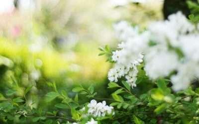 How To Make a Luminous White Garden