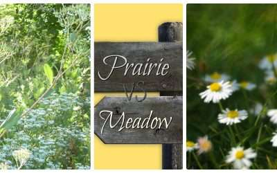Prairie Vs. Meadow, Which One Works In Your Landscape?