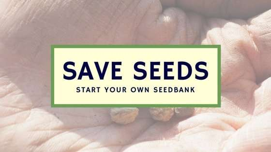 5 Secrets for Growing Your Own Seedbank