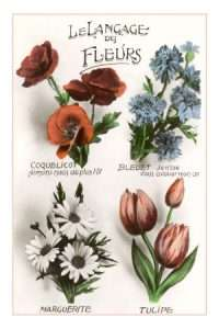 tussy mussy flower meanings