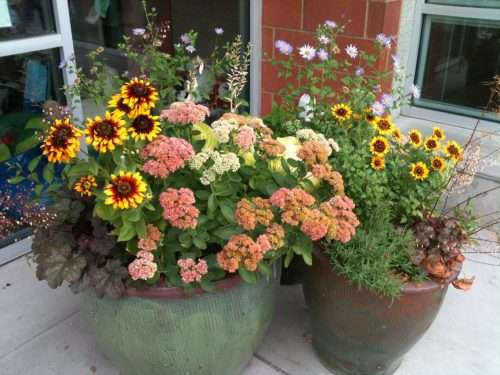 Coreopsis and Sedum Container photo by greenwalksblog on Flickr