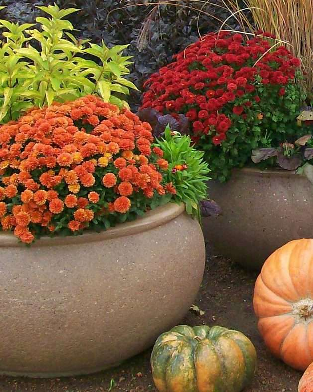 autumn flower container with mums