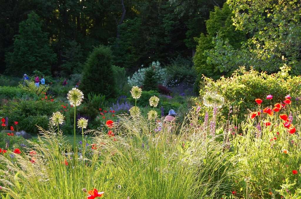 The new american style brings the prairie garden home for American garden company
