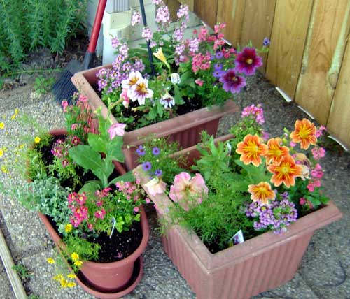 Full Sun Container Garden Ideas Photograph container garde