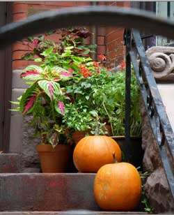 planting to complement a brick entryway