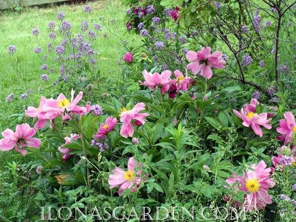 Pink Flower Garden Design