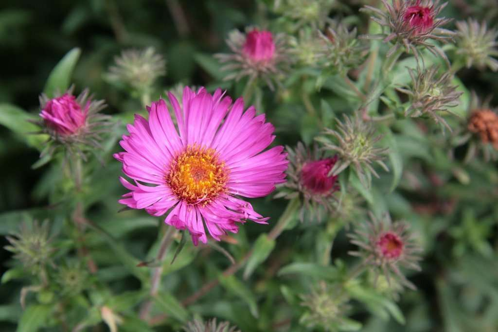 Flowers For Fall Late Blooming Perennials And Shrubs