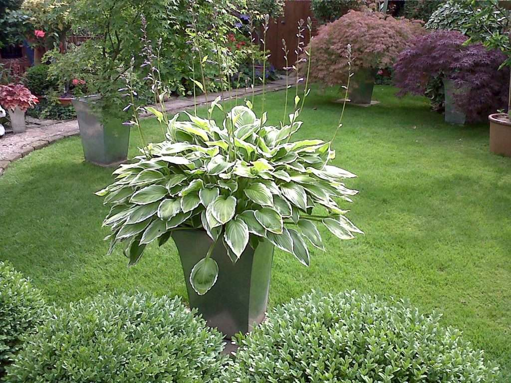 Simple but stunning containers for Large bushes for landscaping